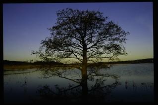 Træ ved Årslev Engsø