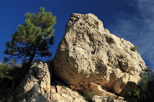 Rock and pine