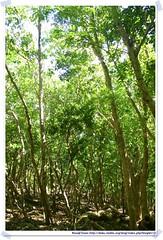 20041020_Guana@BVI_Grand Ghut Trail_002_A