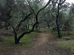 La Crescenta 2017 - 03 Crescenta Valley Community Regional Park