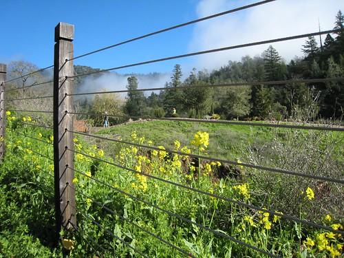 napa, calistoga ranch IMG_1313
