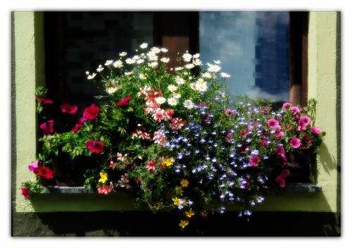 flowers alps österreich green austria blossom bloom alpen hohetauern bösenstein scheibelsee edelrautehütte