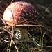 Mushroom by hostelforest