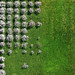 Flowering fruit trees by Aerial Photography