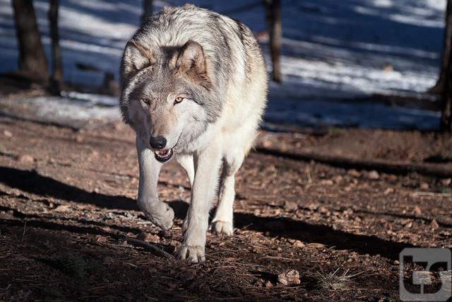 Responding to the Wild