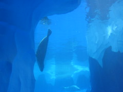 animal, marine mammal, ice cave, marine biology, azure, whales, dolphins, and porpoises, underwater, blue,