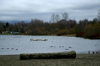 Image of Trout Lake Beach near Vancouver.