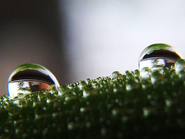 | صور رائعه على مقربه من قطرات المياه مناظر رائعه | 2281810372_4e43cbc962_z.jpg?zz=1