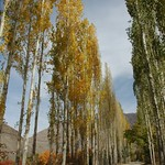 Autumn Trees - Pamir Mountains, Tajikistan