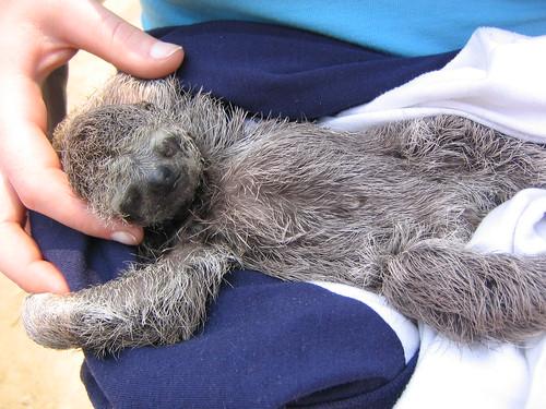 Orphan Sloth