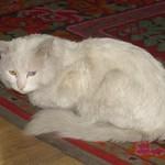 White Cat - Urumqi, China