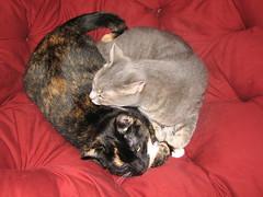 cozy loveys