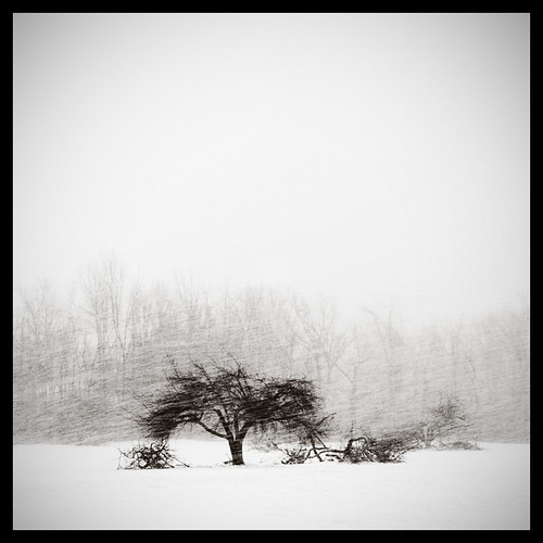 white snow square landscape buffalo snowy tritone stock minimalism simple blizzard whiteout squarecrop lakeeffect canon24105f4lis amherststatepark