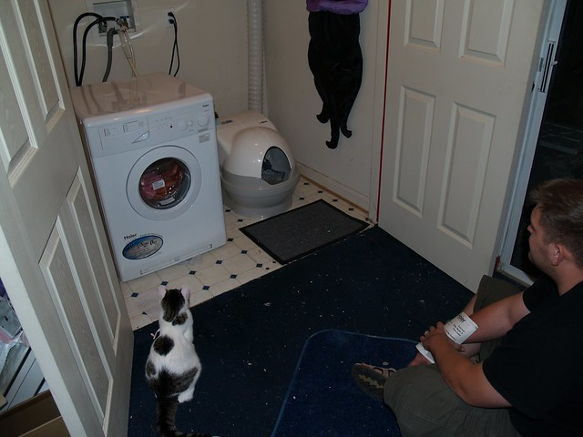 Cat Littler And Dog Food Dinner Kalooah