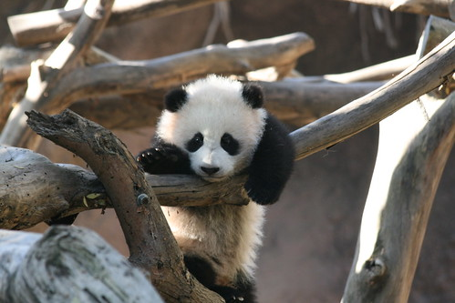 Hi, I am Zhen Zhen.
