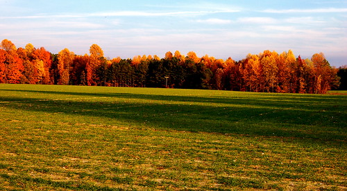 autumn fall field rural virginia foliage pasture va agriculture autumnal bucolic dinwiddiecounty