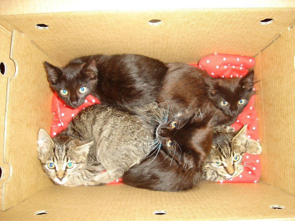 the third batch of foster kittens for 2008