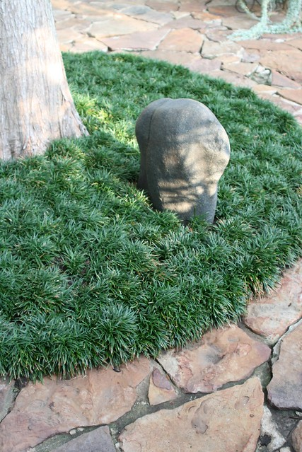 Is Mondo Grass Safe For Dogs To Eat