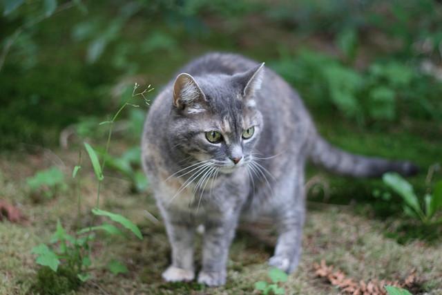 Cat Box Edenvale