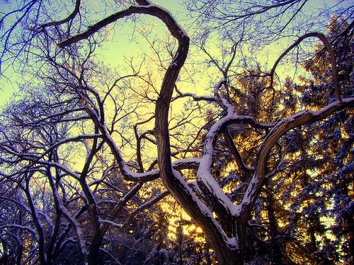 trees winter friends sunset canada tree colors december colours dusk branches angels saskatchewan muenster treebranches cubism blueribbonwinner 10faves flickrsbest diamondclassphotographer flickrdiamond windyangels overtheexcellence betterthangood goldstaraward angelsdreams worldwidelandscapes stpetesabby wintersplendour