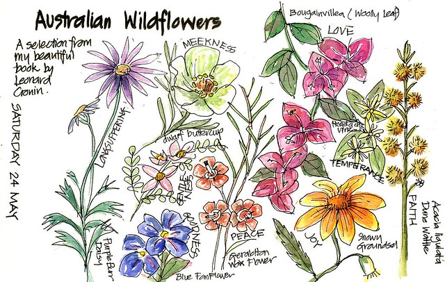 Australian Flowers Drawing a Walk in The Woods