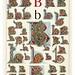 002-Letra B-Owen Jones Alphabet 1864- Copyright © 2010 Panteek.  All Rights Reserved