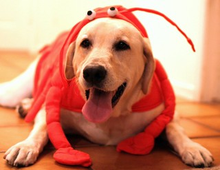 Max the Lobster Dog!