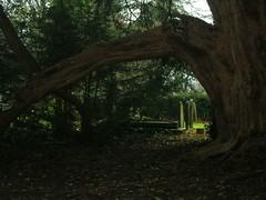 view through yew
