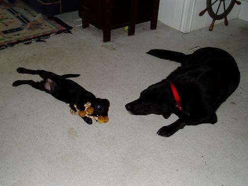 jake and baby maisie