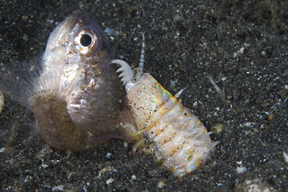 Bobbit worm attack