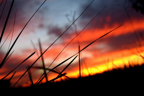 blue sunset red sky orange grass silhouette clouds lowlight lowangle