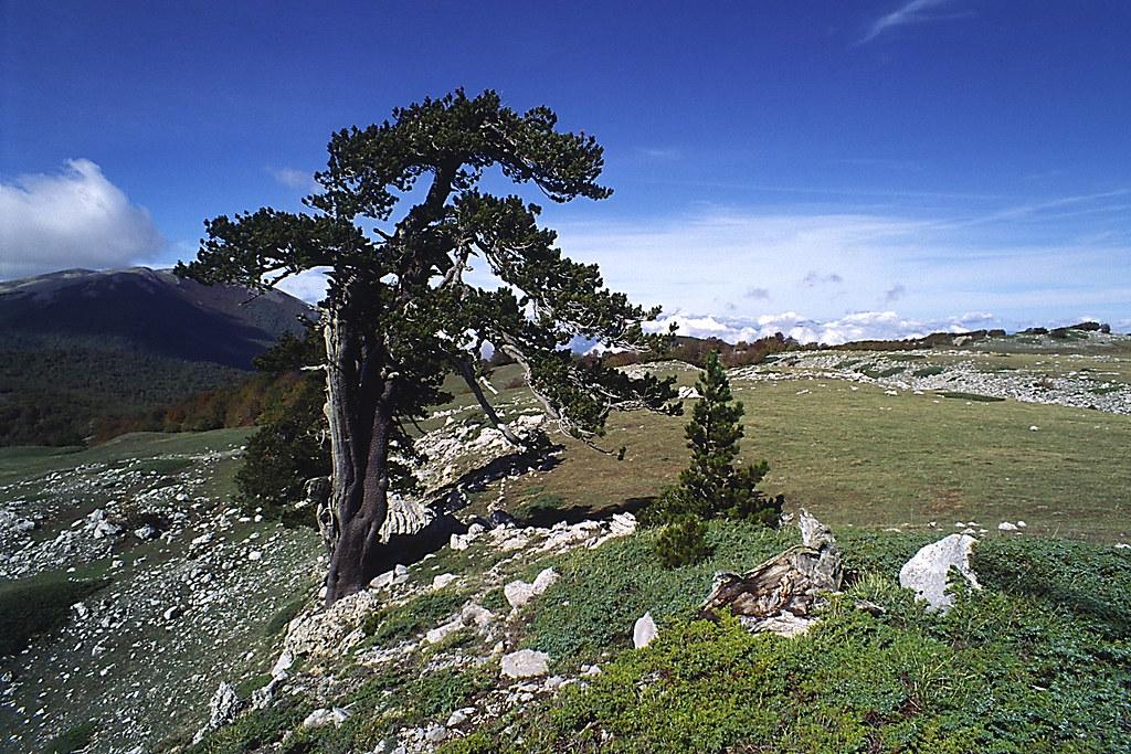 Parco Nazionale del Pollino (Pino Loricato)