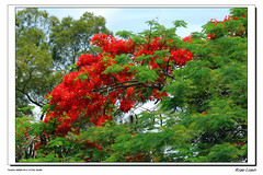 Tree, leaf and blossom