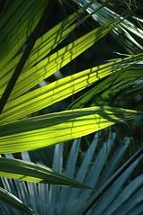 Florida: Sunken Gardens