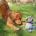 Small photo of Bailey's adventure