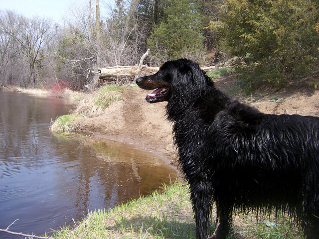 Indy and the Rum River in Anoka