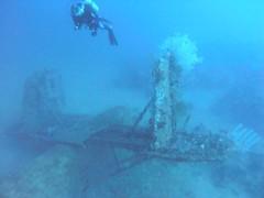 vehicle(0.0), diving(0.0), freediving(0.0), underwater diving(1.0), sports(1.0), marine biology(1.0), water sport(1.0), underwater(1.0), shipwreck(1.0),
