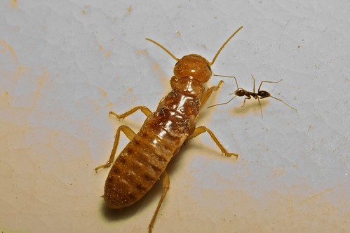 King Termite Variations on a termite theme after ogden nash termite ...