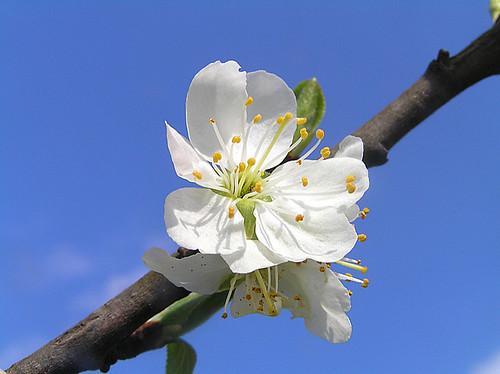 Spring in heaven