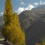 Autumn Leaves in Wakhan Valley - Pamir Mountains, Tajikistan