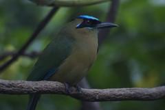 nightingale(0.0), green jay(0.0), jay(0.0), animal(1.0), branch(1.0), nature(1.0), fauna(1.0), bluebird(1.0), beak(1.0), bird(1.0), wildlife(1.0),