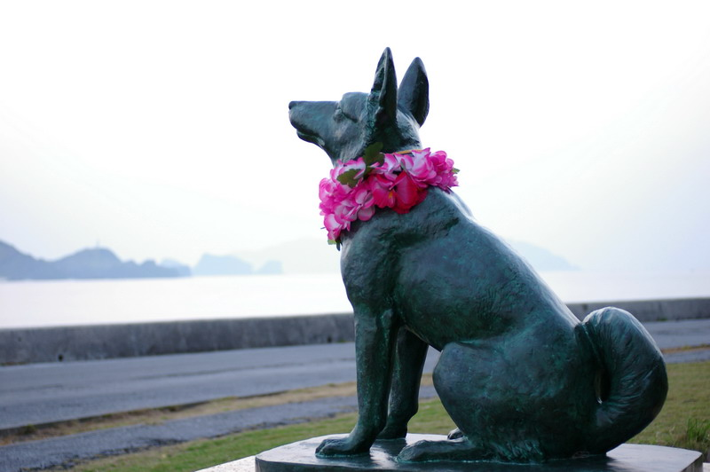 沖繩─貓島就該如此慵懶(圖多)