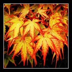 natures seasons