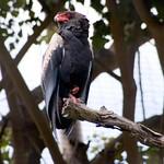 San Diego Zoo 056