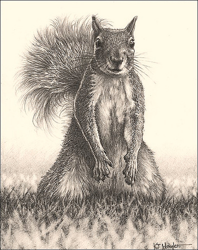 'Looking for Lunch' - Grey Squirrel - Fine Art Pencil ...