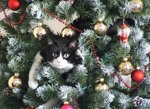 Cat in Xmas Tree