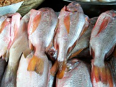 tilapia, animal, fish, fish, seafood, common rudd, red snapper, tilefish, food, red seabream,
