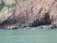 harbour seal hangout