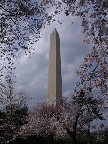 Washington Monument and Cherry Blossoms, Washington DC