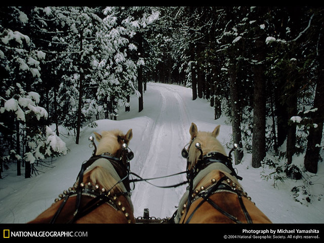 winter clydesdales in the snow flickr photo sharing
